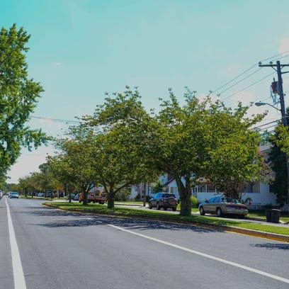 City arborist presents plans to start planting trees