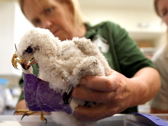Animal care manager Lou Rae Whitehead, left, and executive