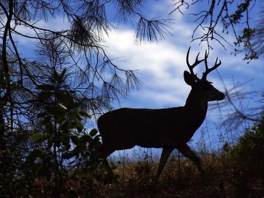 Deadlines are approaching for the Nevada Department of Wildlife's big game tag applications.