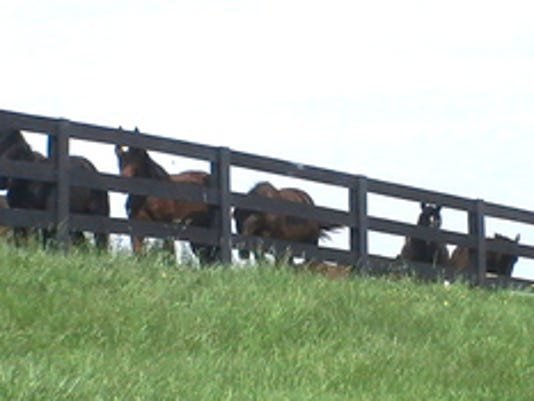 """Beth Ney of Dover Twp submitted this photo to the YDR Animals gallery Apr. 15. Ney writes, """"Curious horses came running to look through the fence to see what the person with the camera was all about.""""  Submitted"""
