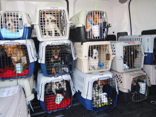 Rescue Dogs Near Delaware