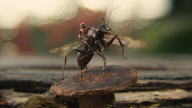 """Ant-Man/Scott Lang (Paul Rudd) rides Antony in """"Ant-Man,"""" now in theaters."""
