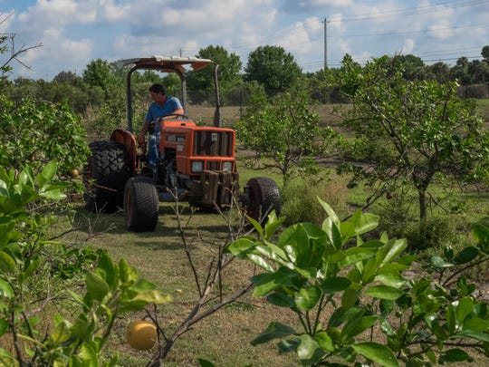 Eric Barkwell mixes innovations and old-time practices in his effort to raise citrus without harmful herbicides or pesticides.