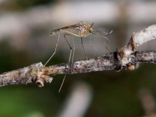 Bay Area Vector Control Team Investigates West Nile Mosquito Presence