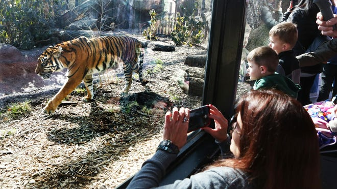 The city could save money in the long term if it transitions zoo governance, city officials said Tuesday.