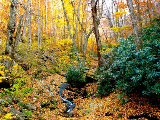 A slow moving waterfall trickles down a leaf covered mountain side.