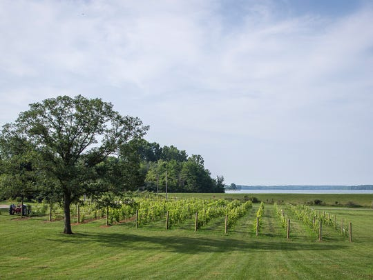 A view overlooking the vineyard at Welch Winery with Prairie Creek Reservoir in the background.