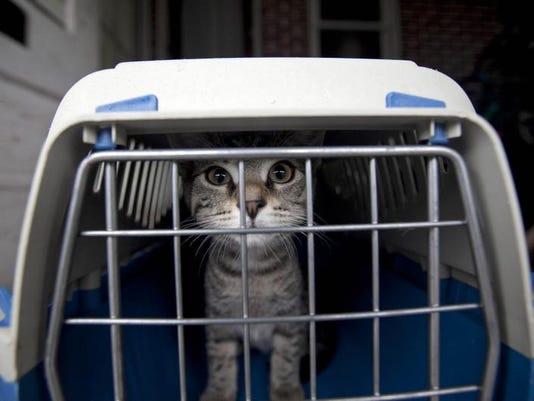 -071310-07ll.forgottencats-jc001.jpg20100715.jpg
