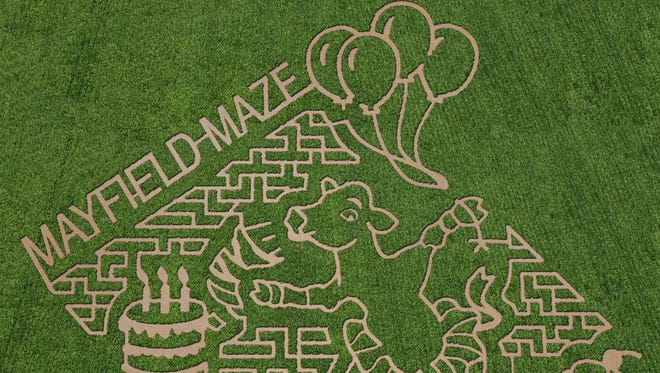 Mayfield Farms' 2017 corn maze design features a cow, balloons and birthday cake.