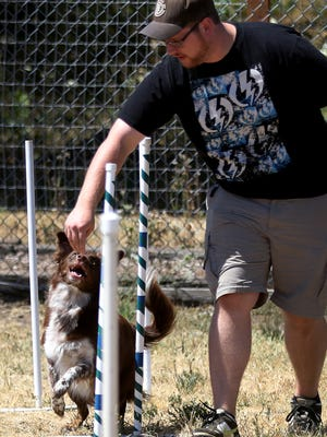 Agility will be among the activities to try June 4 at Poocha-Paw-Looza.