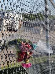 A bouquet of wilted flowers hangs in the fence surrounding Didion Milling days after an explosion ripped through the corn mill plant on May 31 killing three workers and injuring about a dozen others. A fourth worker died in the hospital from injuries sustained in the blast.