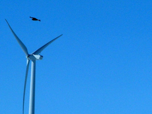 Wind energy firm pleads guilty to eagle deaths