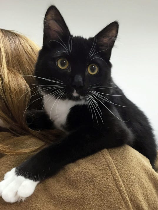 MoMo is an 8-month-old boy who has tons of energy. When you get him out of his cage, he literally jumps in your arms. He's got long, black-and-white hair, so his new owners will have to realize he'll need grooming to keep his fur free of mats. MoMo will spice up anyone's life.