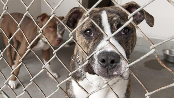 Dogs available for adoption at Valley Oak SPCA on Tuesday, April 12, 2016.