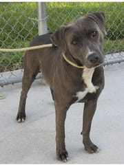 Do you know me? A traveler picked me up in Florida and turned me in to a Virginia shelter without looking for my family. I need help to get home!