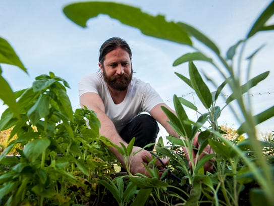 Thomas Lucas picks herbs for salads at the 7th annual