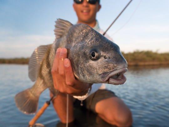 Just more fish #vivacc #sealevel