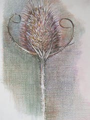 """""""Teasel,"""" by Lynn Palumbo, is part of the """"Walking, Looking, Drawing"""" exhibit opening Aug. 4 at Starr Library in Rhinebeck."""