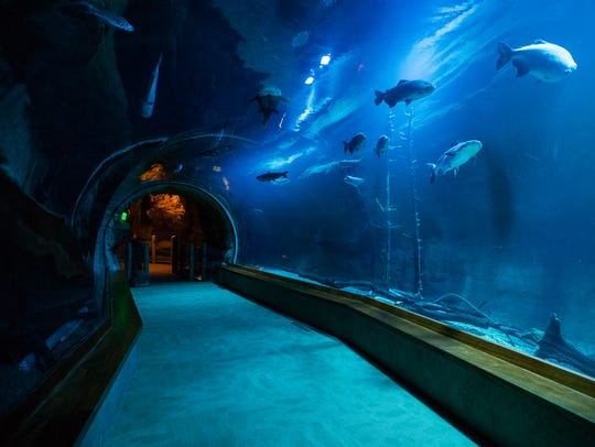 A tunnel takes you underneath a river habitat teeming