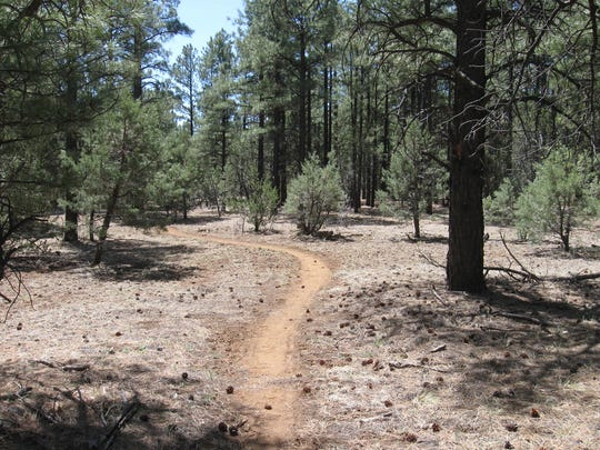 The Panorama Trail weaves through open pine forest