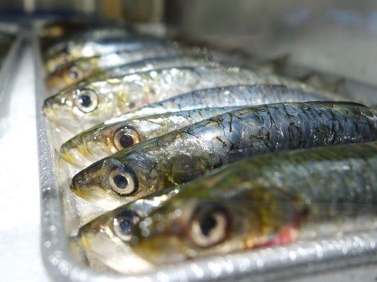 Fresh sardines at Chelsea Market in New York CIty