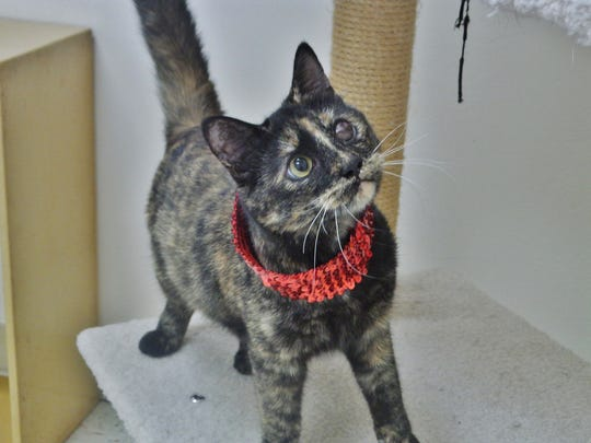 Fiona is a 1-year-old tortie girl who is super sweet. She came into us with an oddly-colored left eye and after discussion with the vet, we believe she's blind in that eye because of an infection early in her life that wasn't treated correctly. Don't think for a minute that stops little Fiona, though! She still loves attention and will run and play all the time. Please come out and see if Fiona is the right match for you.