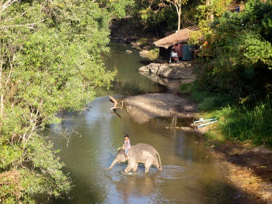 One of the many elephant parks near Chiang Mai.