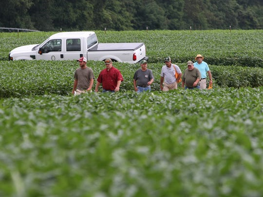 People make their way to the No-Till Wheat Production Tour during the 29th Milan No-Till Crop Production Field Day in Milan, Tenn., on Thursday, July 28, 2016.