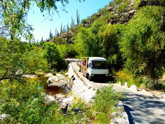 The trams make a twisting climb into Sabino Canyon