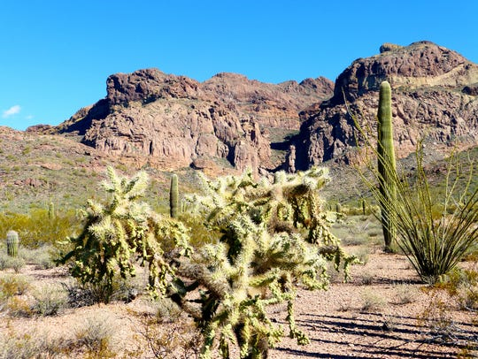 Organ Pipe Cactus National Monument exhibits a remarkable