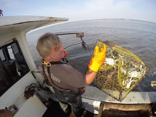 Commercial crabber John Moore of Magnolia checks his crab pots east of Bowers Beach on his boat, the Bay Bee Lynn.