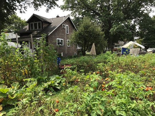 Donald Collins has been growing vegetables in his Second Street yard since 1957. Lately he just grows tomatoes.