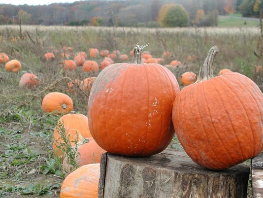 Pumpkins-stump-AP