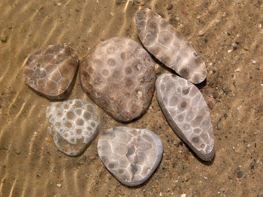 The Petoskey stone's honeycomb pattern is visible in
