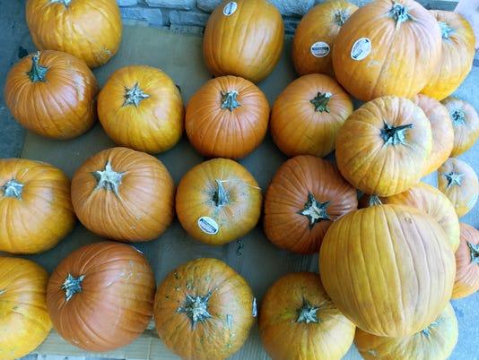 636440016313551434-Pumpkins-03.JPG