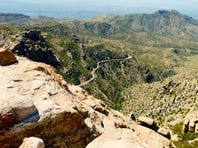 Driving to the top of Mt. Lemmon in Tucson is the biological equivalent of traveling from the deserts of Mexico to to the forests of Canada in just 27 miles.