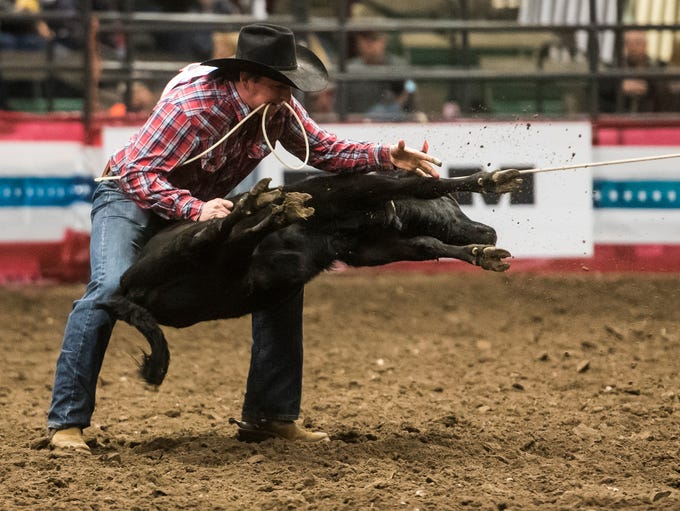 Tie down roping during the 39th Annual Montana Pro