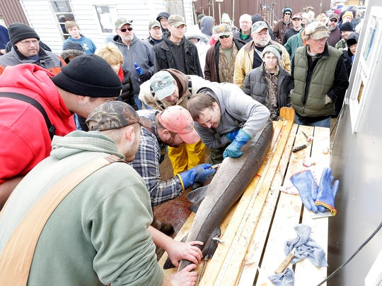 Sturgeon spearers and interested on-lookers gathered at Wendt's On The Lake during the first day of the 2017 sturgeon spearing season.