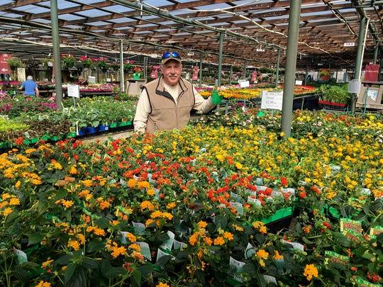 David Bates, owner of Bates Nursery, shows off the almost fool proof sun loving Lantana.