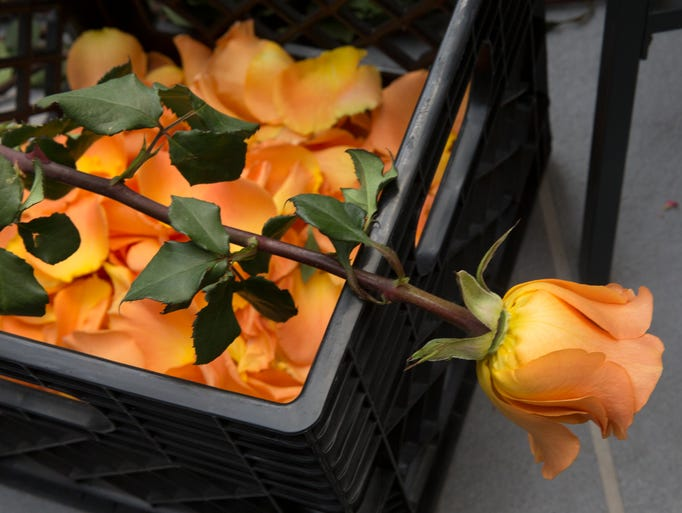 Roses at Bell is the culmination of a multi-day artistic