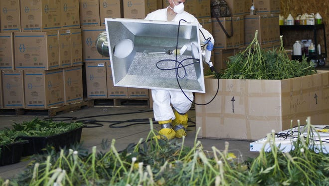 The Maricopa County Drug Task Force removes Marijuana plants and growing materials after shutting down an allegedly illegal grow operation at a warehouse located near 40th Street and Washington Street on Tuesday, April 19, 2016, in Phoenix, Ariz.