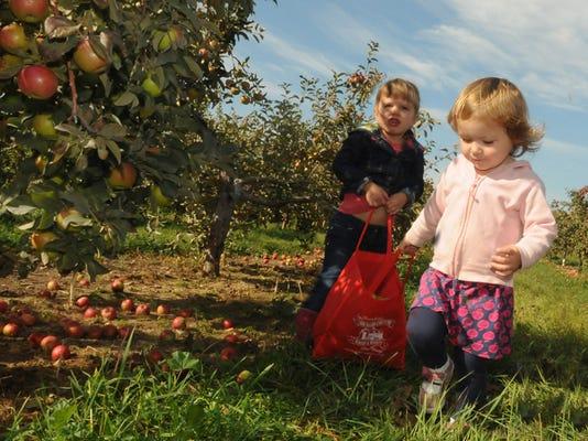 -DCN 0924 fall harvest fest preview 3.jpg_20140922.jpg