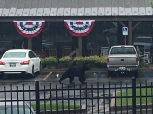 Bear at Knoxville Center Mall