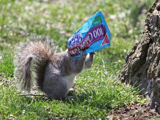 This squirrel enjoys a 100-calorie snack in the warm sunny weather along the Brandywine near the Brandywine Zoo in Wilmington. It's not a bad idea to bring water and snacks for the First Day Hikes.