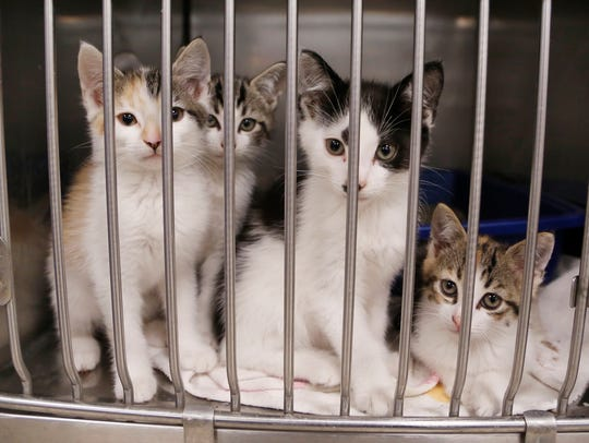 Cats waiting for a new home at Almost Home Humane Society