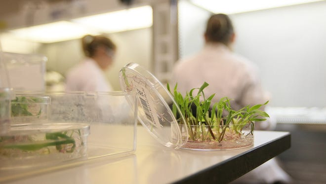 DuPont Pioneer scientists work in one of the company's laboratories in Johnston in this 2010 file photo.