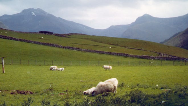 Sheep graze at the base of Ben Nevis in Scotland.