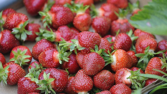 Strawberry season is here in central Wisconsin.