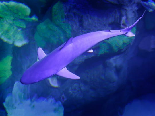 Sharks and plenty of kinder, gentler sea creatures await visitors at the Sea Life Michigan Aquarium, which is hosting an adults-night-out event Friday.