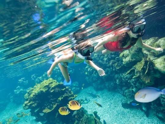 Snorkeling in Rainbow Reef offers families a wonderful underwater expeience at Aulani, a Disney Resort & Spa in Hawai'i.